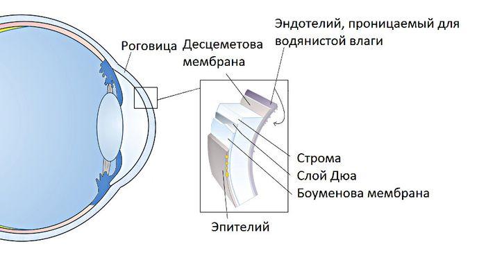 Эндотелиальная дистрофия роговицы