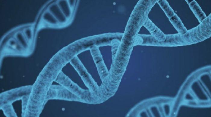 Гены миопии