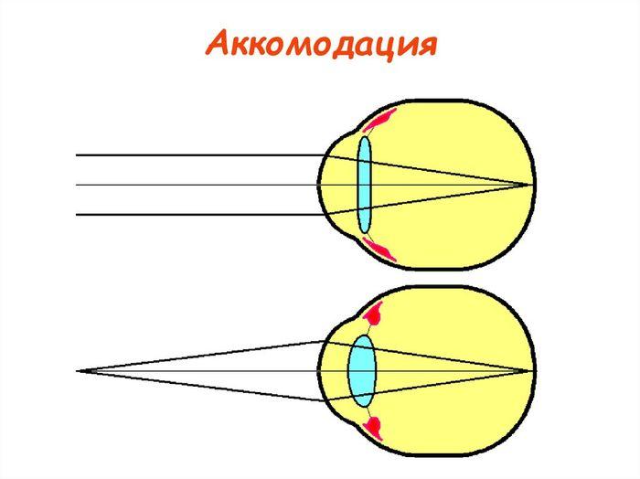 Аккомодация хрусталика