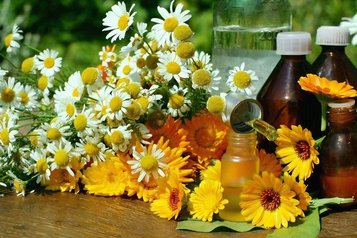 Цветки календулы и ромашки