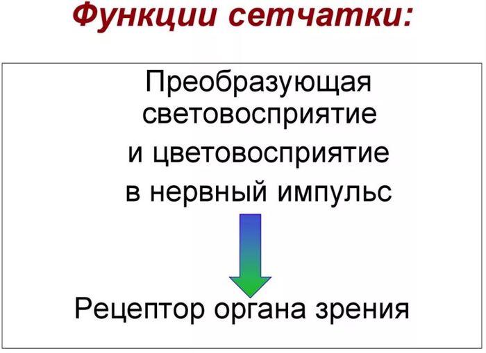 Функции сетчатой оболочки