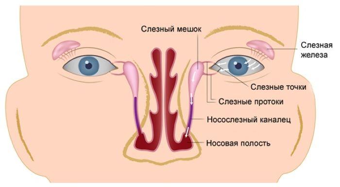 Слезно носовой канал